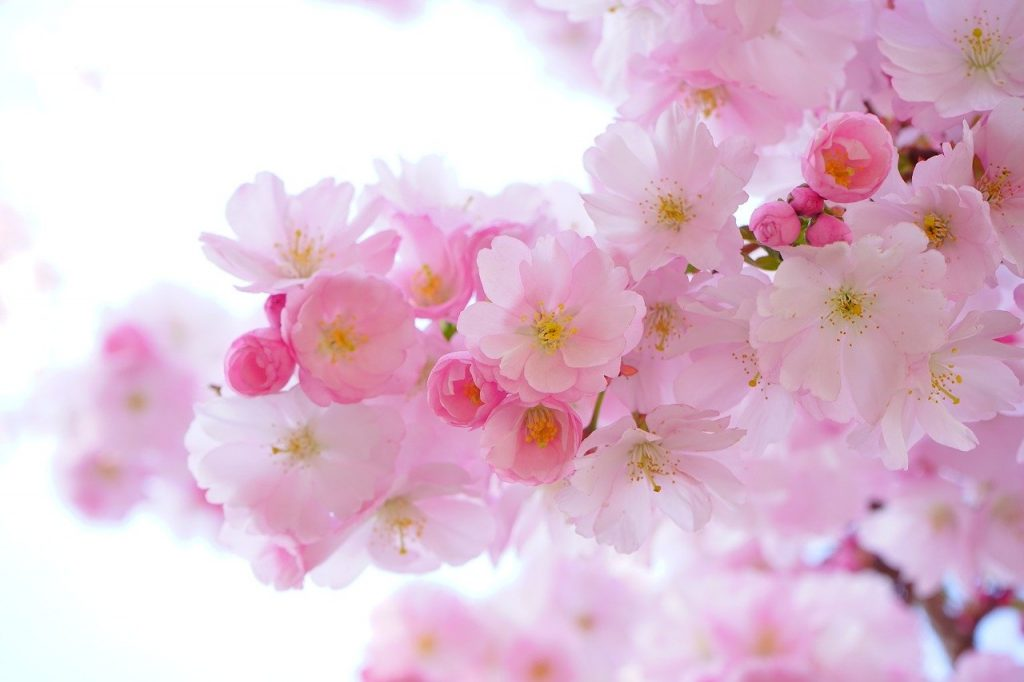 Beauty blossoms from within